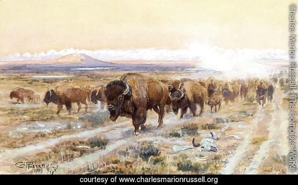 The Bison Trail
